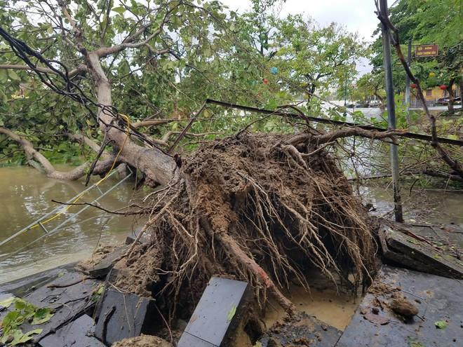 Gió bão lớn quật ngã người đàn ông xuống thành cầu; Bà con Quảng Nam, Quảng Ngãi, Bình Định: Trưa sẽ có lúc lặng gió, nhưng tuyệt đối không ra ngoài - Ảnh 3.