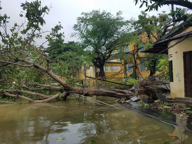 Gió bão lớn quật ngã người đàn ông xuống thành cầu; Bà con Quảng Nam, Quảng Ngãi, Bình Định: Trưa sẽ có lúc lặng gió, nhưng tuyệt đối không ra ngoài - Ảnh 1.