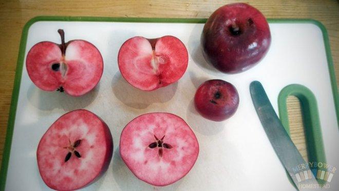Pendragon: Loại táo vượt qua 14 đối thủ để được đánh giá bổ dưỡng nhất thế giới; ở VN có bán không? - Ảnh 2.