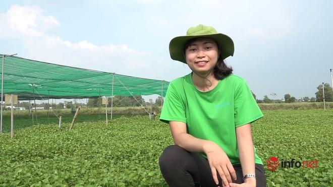 Cô gái trồng rau má xuất khẩu đi châu Âu từng không dám gọi vốn vì sợ thất bại - Ảnh 2.