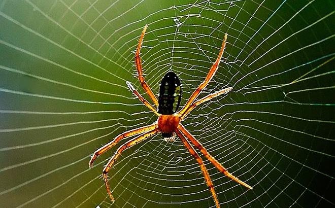Thấy 1 con nhện đang bò trên tường, 3 người có 3 phản ứng khác biệt khiến chúng ta phải ngẫm lại mình