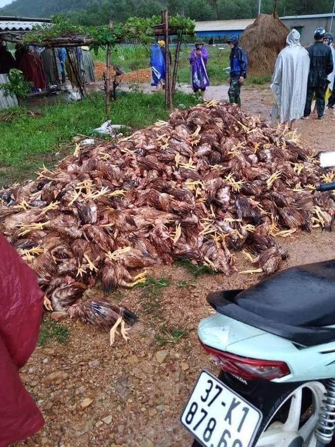 Xót xa hình ảnh 10.000 con gà chết chất đống sau cơn lũ dữ trong đêm - Ảnh 6.