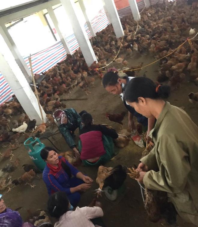 Xót xa hình ảnh 10.000 con gà chết chất đống sau cơn lũ dữ trong đêm - Ảnh 4.