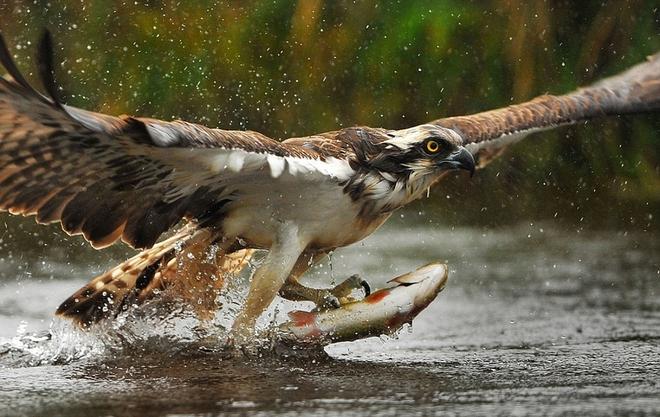 Phát hiện số lượng cá nuôi trong ao ngày càng giảm dần, người đàn ông theo dõi và phát hiện cảnh tượng không thể ngờ tới - Ảnh 1.