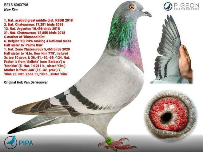 Cận cảnh chim bồ câu đắt nhất thế giới có giá hàng chục tỉ đồng - Ảnh 1.