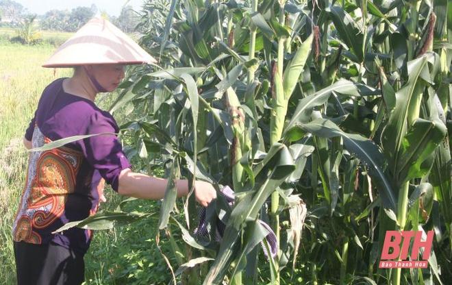 Từ trời Tây về quê, vợ chồng Việt kiều bỏ tiền tỷ làm... nông dân chính hiệu - Ảnh 5.
