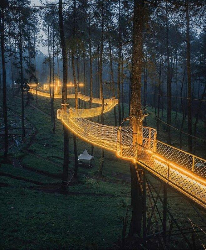 Cây cầu phát ánh sáng kỳ diệu trong khu rừng Indonesia - Ảnh 1.