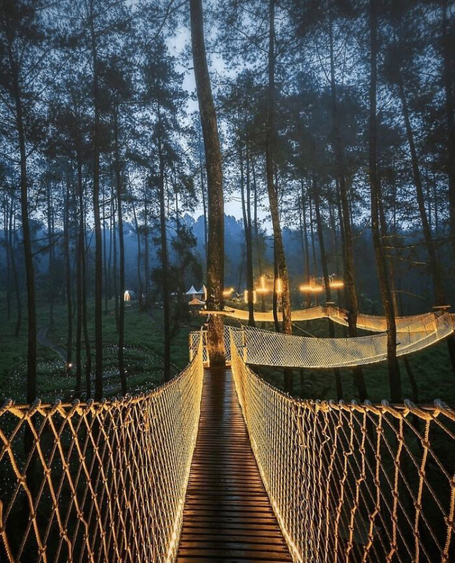 Cây cầu phát ánh sáng kỳ diệu trong khu rừng Indonesia - Ảnh 2.