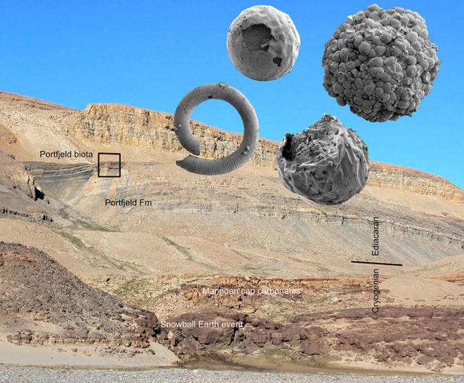 Sinh vật hình… phôi thai từ thế giới đã mất 570 triệu năm trước - Ảnh 1.