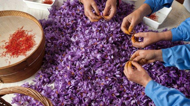 Nhà giàu Việt săn lùng nhụy hoa giá 450 triệu đồng/kg, chuyên gia chỉ rõ: Sẵn trong các thuốc rẻ tiền dễ kiếm! - Ảnh 4.