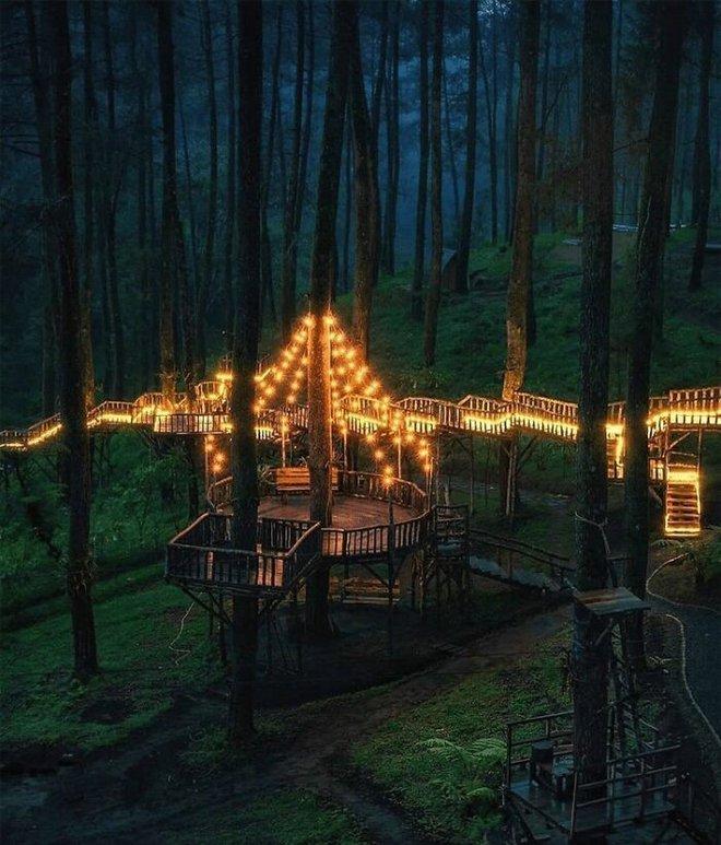 Cây cầu phát ánh sáng kỳ diệu trong khu rừng Indonesia - Ảnh 3.