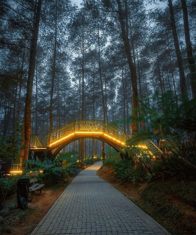 Cây cầu phát ánh sáng kỳ diệu trong khu rừng Indonesia - Ảnh 4.