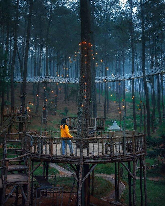 Cây cầu phát ánh sáng kỳ diệu trong khu rừng Indonesia - Ảnh 5.