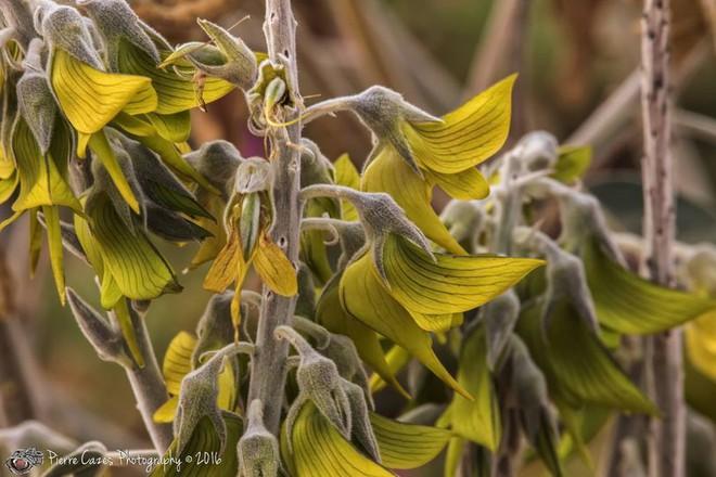 Kỳ lạ loài cây có hoa hình dạng như... chim - Ảnh 1.