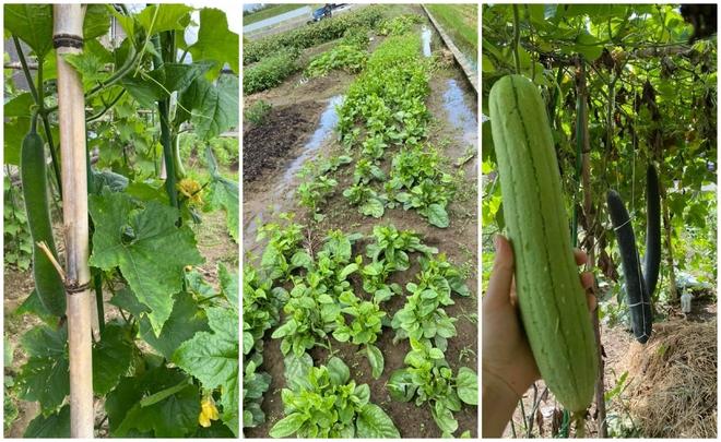 Hàng xóm cho mượn đất, cặp đôi trồng cả một gia tài lớn ở Nhật Bản: Tên từng loại khiến người ta phải ghen tỵ - Ảnh 3.