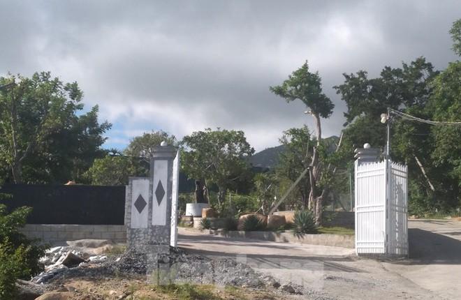 Khánh Hoà: Núi Hòn Rồng tiếp tục bị cày xới để xây dựng trái phép - Ảnh 1.