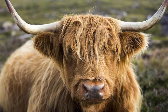 Những loài động vật sở hữu bộ lông kỳ lạ nhất thế giới - Ảnh 2.