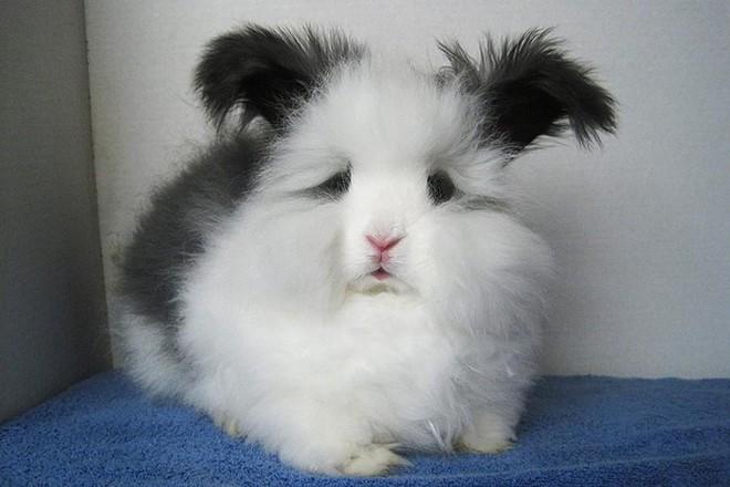 Những loài động vật sở hữu bộ lông kỳ lạ nhất thế giới - Ảnh 14.