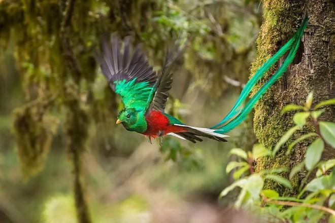 Những loài động vật sở hữu bộ lông kỳ lạ nhất thế giới - Ảnh 18.