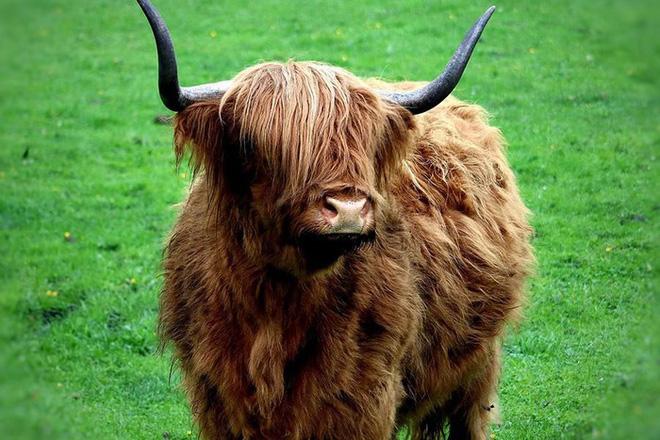 Những loài động vật sở hữu bộ lông kỳ lạ nhất thế giới - Ảnh 3.
