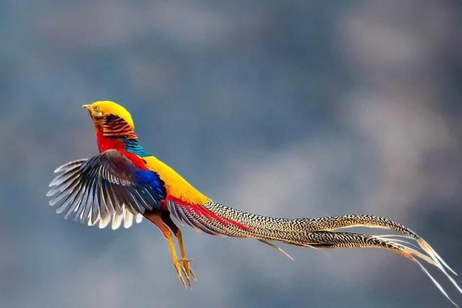Những loài động vật sở hữu bộ lông kỳ lạ nhất thế giới - Ảnh 21.