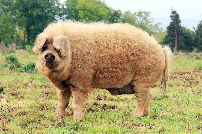 Những loài động vật sở hữu bộ lông kỳ lạ nhất thế giới - Ảnh 23.