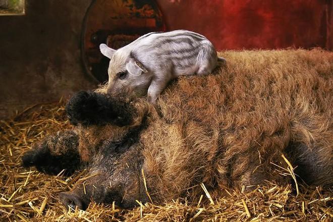 Những loài động vật sở hữu bộ lông kỳ lạ nhất thế giới - Ảnh 24.