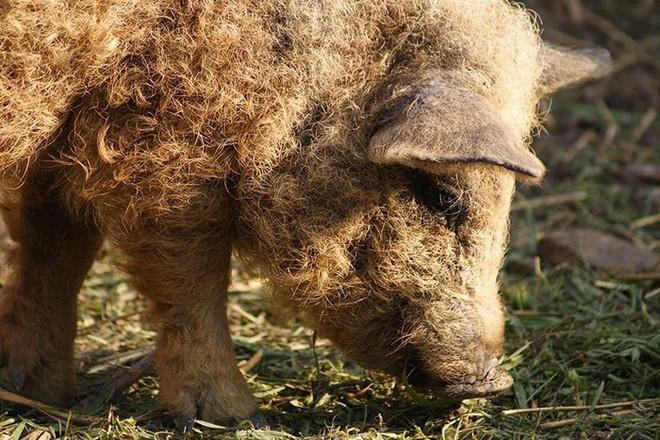 Những loài động vật sở hữu bộ lông kỳ lạ nhất thế giới - Ảnh 25.