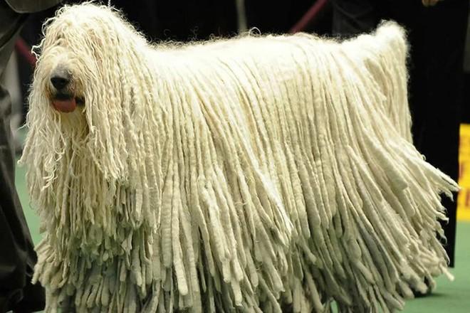 Những loài động vật sở hữu bộ lông kỳ lạ nhất thế giới - Ảnh 5.