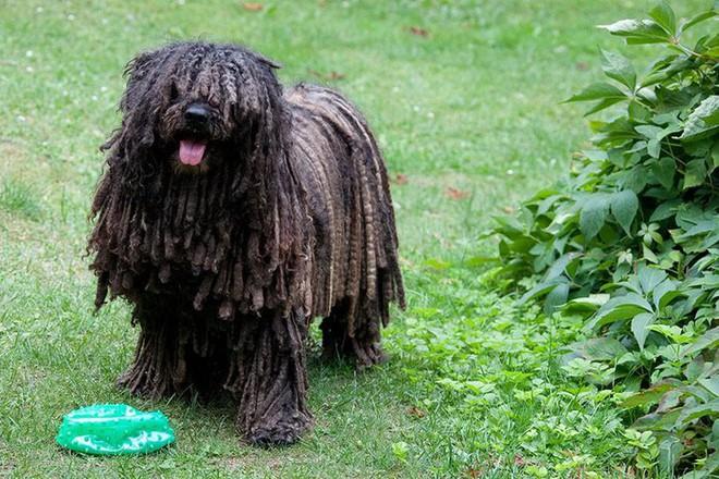 Những loài động vật sở hữu bộ lông kỳ lạ nhất thế giới - Ảnh 6.