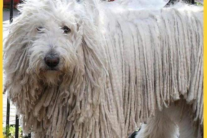 Những loài động vật sở hữu bộ lông kỳ lạ nhất thế giới - Ảnh 7.