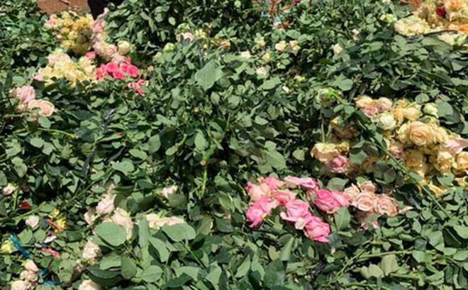 """Chủ vườn ngỡ ngàng phát hiện """"hoa tặc"""" cắt sạch 2.000 bông hồng: Vết cắt rất chuyên nghiệp"""