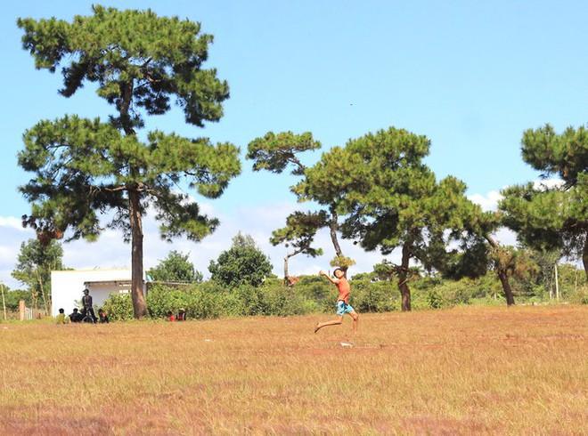 Đổ xô tới ngọn đồi bị loại cỏ nhuộm màu hồng quyến rũ - Ảnh 3.