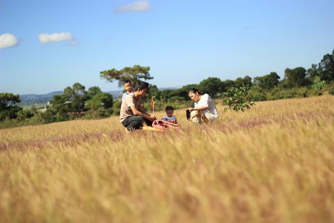 Đổ xô tới ngọn đồi bị loại cỏ nhuộm màu hồng quyến rũ - Ảnh 6.