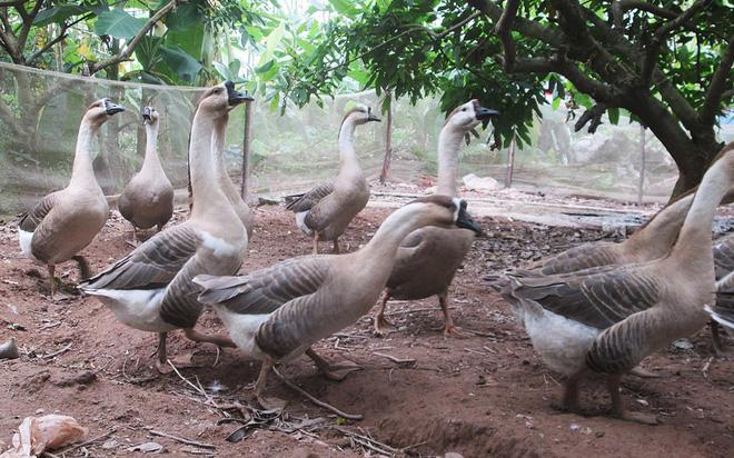 Trở thành tỷ phú nông dân từ những con vật lạ  - Ảnh 5.
