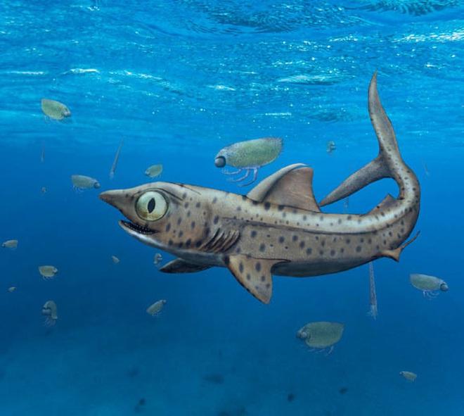 Vua thủy quái 365 triệu tuổi: Loài chưa từng thấy trên thế giới - Ảnh 1.