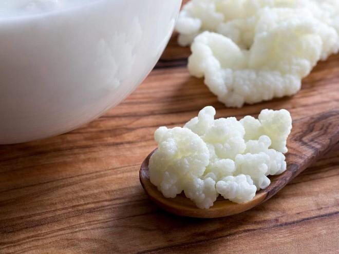 """Sự thật về loại nấm sữa chị em nô nức đem về nuôi: Có xứng danh """"tinh hoa, siêu thực phẩm? - Ảnh 8."""