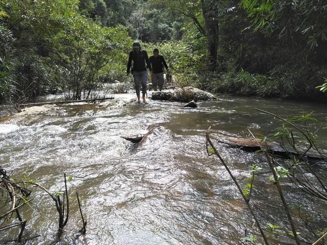 Tận thấy hiện trường rừng giáng hương cổ thụ bị tàn phá ở Tây Nguyên - Ảnh 1.