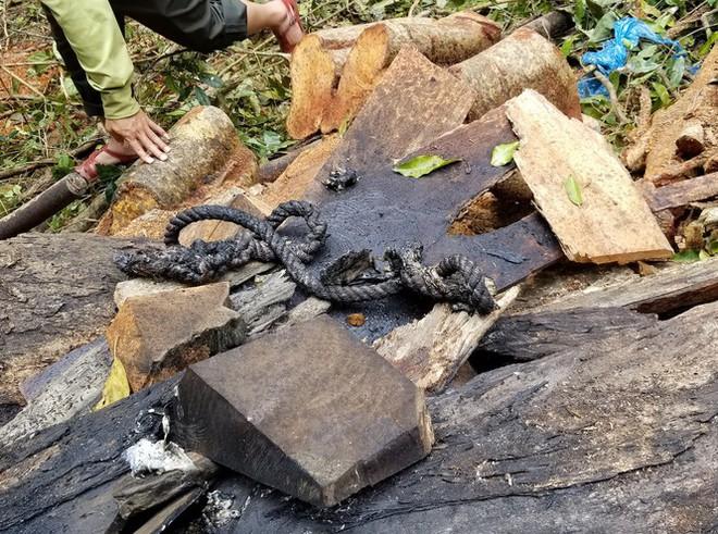 Tận thấy hiện trường rừng giáng hương cổ thụ bị tàn phá ở Tây Nguyên - Ảnh 7.
