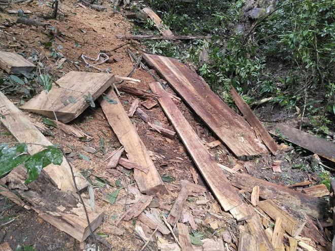 Tận thấy hiện trường rừng giáng hương cổ thụ bị tàn phá ở Tây Nguyên - Ảnh 10.