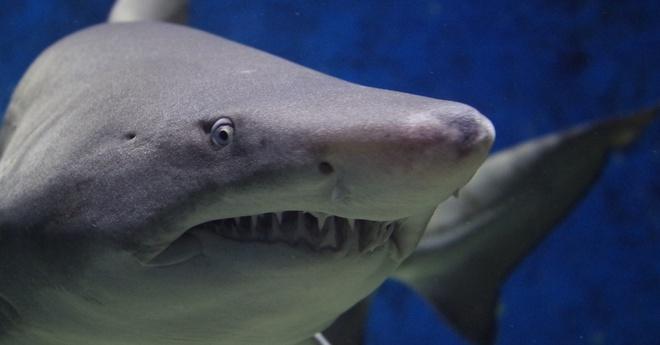 Kịch bản kinh hoàng với 500.000 con cá mập liên quan đến một số loại vắc xin Covid-19 - Ảnh 2.