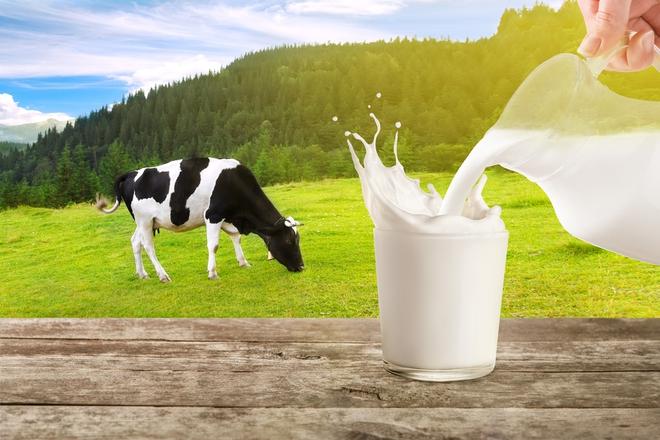 Sữa bò và sữa đậu nành: Đặt lên cân hai loại sữa được ưa chuộng, xem sữa nào nổi trội hơn - Ảnh 1.
