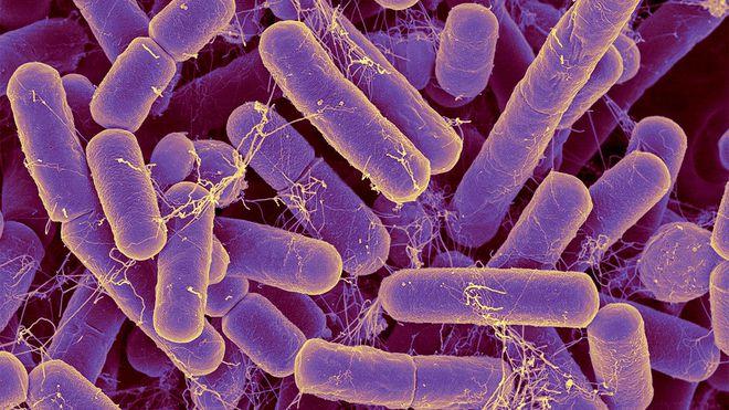 Whitmore không ăn thịt người, còn vi khuẩn thật sự ăn thịt người lại không phải Whitmore! - Ảnh 2.