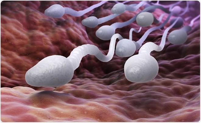 """4 thói quen hại tinh trùng: Số 1 có thể khiến tinh trùng tổn thương không thể sửa chữa"""" - Ảnh 3."""