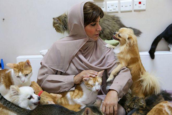Người phụ nữ làm bạn với gần 500 con mèo - Ảnh 1.