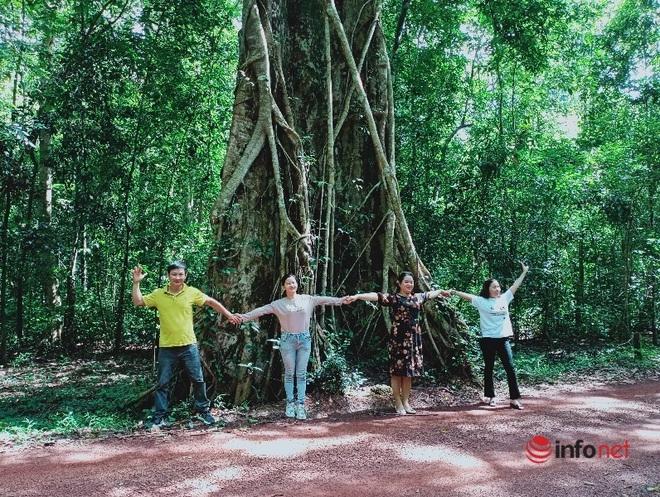 Cây kơ nia lớn nhất Việt Nam gây ấn tượng đặc biệt trong khu bảo tồn thiên nhiên Đồng Nai - Ảnh 1.