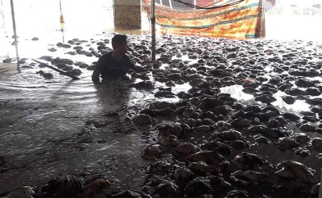 Thủy Tiên và Công Vinh về Nghệ An trao tiền, tặng 115 triệu cho người mất cả trại gà 10.000 con - Ảnh 5.