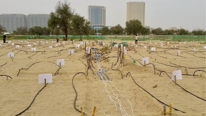 Đất sét nano: Công nghệ đột phá có thể biến sa mạc thành đồng ruộng trong 7 tiếng đồng hồ - Ảnh 6.