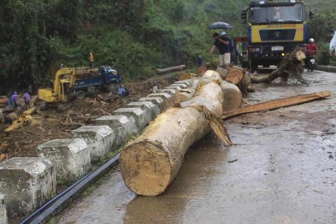 Gỗ khai thác trái phép trôi vây kín chân cầu sau bão số 9 - Ảnh 4.
