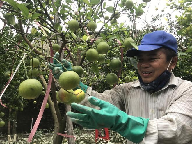 Vườn cam quý ngập nặng, chủ vườn mếu máo vứt bỏ những trái thối - Ảnh 6.